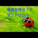 幸運を呼ぶ!?エサは何?テントウムシの生態・採集(観察)方法・飼育方法を紹介