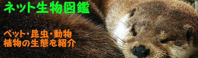 ネット生物図鑑〜ペット・動物・昆虫・生き物の生態や飼い方を紹介〜