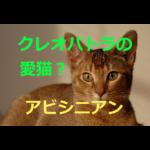 クレオパトラの愛猫!?~アビシニアンの歴史・価格・飼育方法を紹介
