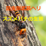 黄色の爆撃機~オオスズメバチやキイロスズメバチの生態と予防策を紹介