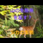 山の生態系には悪影響?~ニホンジカ・鹿の生態を紹介