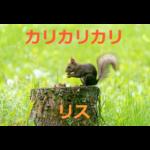 カリカリカリ!器用な食事の仕方に一目ぼれ~リスの生態・飼育方法を紹介
