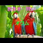 賢いペットの代表~言葉でおしゃべりもできるオウムの生態・飼育方法を紹介